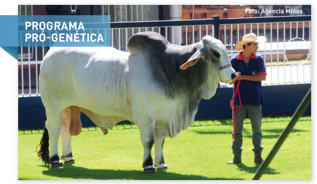Melhoria da qualidade genética do rebanho bovino