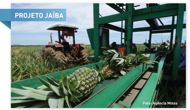 Projeto Jaíba: o maior polo de agricultura irrigada da América Latina